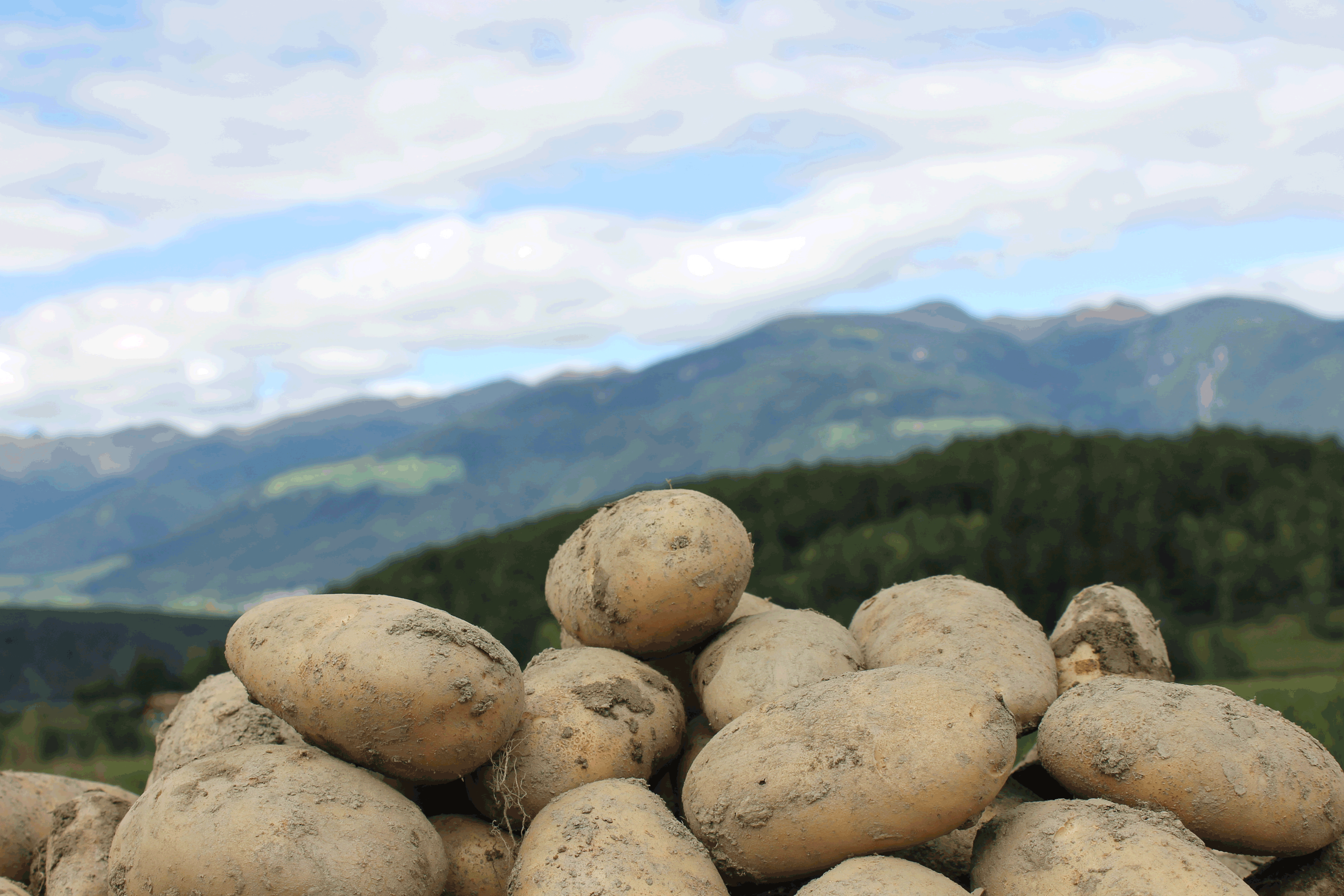 Kartoffeln2